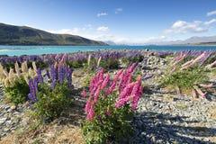 Fuerte viento que sopla en el lago Tekapo Imágenes de archivo libres de regalías
