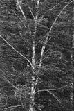 Fuerte viento Todo gris Fotografía de archivo libre de regalías