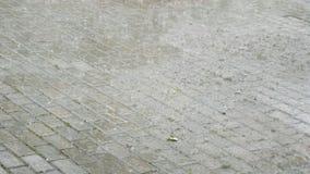 Fuertes lluvias del verano con saludo Las gotas de agua caen en el camino inundado Gotas de agua grandes Las gotas de agua del ot almacen de metraje de vídeo