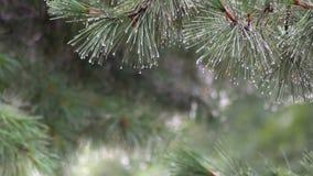 Fuertes lluvias en el parque El aguacero en el bosque del verano la lluvia cae en las hojas verdes de los árboles almacen de metraje de vídeo