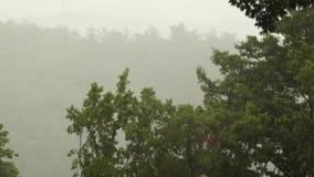 Fuertes lluvias tropicales con el fondo del bosque del roble Incluya el sonido original metrajes