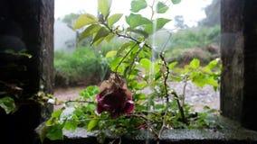 Fuertes lluvias tropicales en selva tropical asiática metrajes