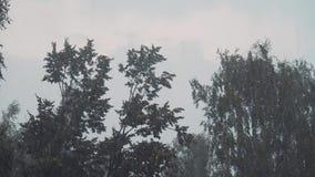 Fuertes lluvias y huracán Curva de los ?rboles bajo la presi?n del viento Tiempo severo Peligro almacen de video
