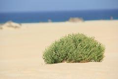 Fuerteventura obraz royalty free