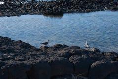 Fuerteventura, bassa marea fotografia stock