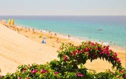 Fuerteventura. Blomma- och Morro Jable strand arkivfoton
