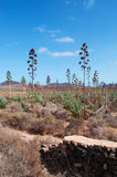fuerteventura, Canarische Eilanden, Spanje Stock Foto's