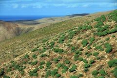 Fuerteventura Canary islands Spain Royalty Free Stock Photos