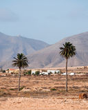 Fuerteventura, Canary Islands, Spain, palm, trees, desert, nature, landscape, climate change. View of Canary landscape with palms, white houses and desertic land royalty free stock image