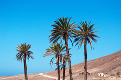 Fuerteventura, Canary Islands, Spain, palm, trees, desert, nature, landscape, climate change. View of Canary landscape with palms, white houses and desertic land stock photography