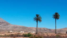 Fuerteventura, Canary Islands, Spain. View of Canary landscape with palms, white houses and desertic land on September 2, 2016. Fuerteventura is known worldwide royalty free stock photography