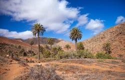 Fuerteventura central, Barranco de las Penitas Fotos de Stock Royalty Free
