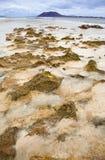 Fuerteventura, Corralejo Markierungsfahnen-Strand stockbilder