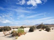 Fuerteventura, Corralejo sand dunes Stock Images