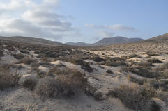 Fuerteventura Gorreones Sotavento dunes 1. Dunes in Gorreones Sotavento south of the island Fuerteventura (Canary Islands Royalty Free Stock Photo