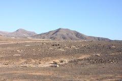 Fuerteventura Kanariefågelö Royaltyfri Bild