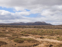 Fuerteventura kanariefåglar, Spanien Arkivfoto