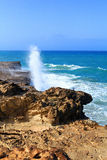 Fuerteventura. Stock Image