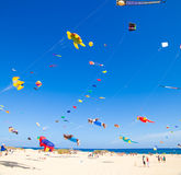 FUERTEVENTURA - NOVEMBER 13: Kite festival Stock Photos