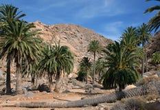 Fuerteventura - palmeras en el Barranco de las Penitas Imágenes de archivo libres de regalías