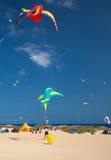 FUERTEVENTURA, SPAIN, NOVEMBER 08 2014, Kite Festival Royalty Free Stock Photo
