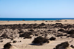Fuerteventura,Spain,on the sand beach Royalty Free Stock Photo