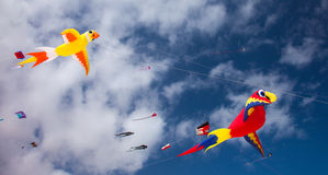 FUERTEVENTURA, SPANJE, 08 NOVEMBER 2014, Vliegerfestival Stock Afbeelding