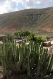 Fuerteventura - Succulent plant at rural house, Vallebronprotected landscape,Canary Islands. The valley is located innorth of the island of royalty free stock image