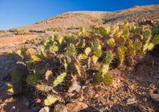 Fuerteventura, Tindaya stock image