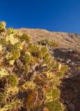 Fuerteventura, Tindaya fotografie stock libere da diritti