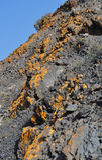 Fuerteventura yellow lichen moss 2. Rocks with Lichen yellow moss close to the La Entallada lighthouse east of the island Fuerteventura (Canary Islands Stock Image
