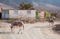 Fuertventura,加那利群岛,西班牙 免版税库存图片