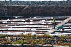 Fuertventura,加那利群岛,西班牙 免版税图库摄影