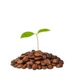 Fuerza Life-giving del café Fotografía de archivo libre de regalías