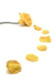 Fuga amarela de Rosa e de pétala Imagens de Stock