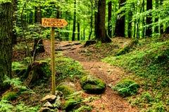 A fuga assina dentro a floresta fotos de stock royalty free