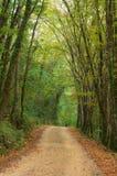 Fuga através da floresta fotografia de stock