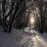 Fuga através da neve Fotografia de Stock