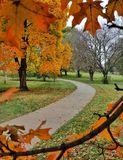 Fuga através das árvores Foto de Stock Royalty Free