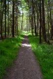 Fuga através de uma floresta imagens de stock