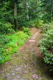 Fuga através de uma floresta Imagem de Stock