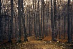Fuga através de uma floresta assustador Fotos de Stock Royalty Free