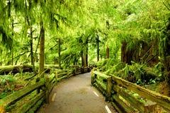 Fuga através do bosque da catedral, ilha de Vancôver, Canadá fotografia de stock