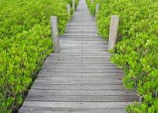 Fuga cênico e bonita do turismo nas madeiras Imagens de Stock
