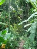 Fuga com o Forrest haitiano fotografia de stock
