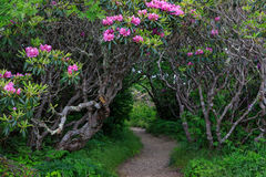 Fuga Craggy North Carolina do pináculo do jardim da entrada fotos de stock