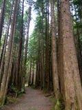 Fuga da floresta úmida Fotos de Stock