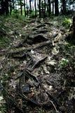 Fuga da floresta Fotografia de Stock