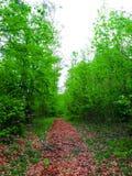 Fuga da floresta Imagem de Stock