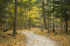 Fuga da floresta do enrolamento no parque estadual de Potawatomi Fotos de Stock Royalty Free